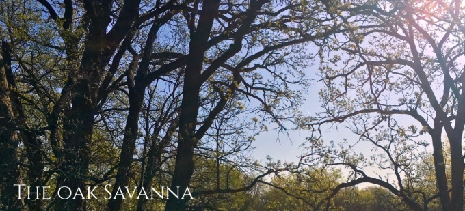 Oak Savanna.jpg